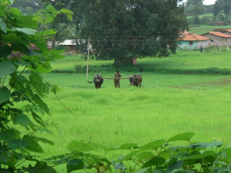 India 2013 051